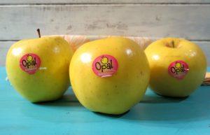 Opal-Apples-a